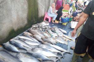 Berburu Ikan Segar di Pelelangan Pasar Kebon Roek Lombok