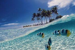 Jelajahi Bawah Laut, Diserbu Ribuan Ikan Lucu di Gili Petelu – Lombok
