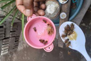 Desa Tanak Embet, Wisata Budidaya Lebah penghasil Madu Asli Lombok
