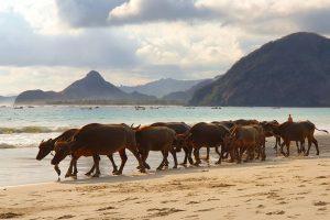 Itinerary 2 Hari 1 Malam di Kuta-Lombok, Ini Rekomendasi Wisata Keren