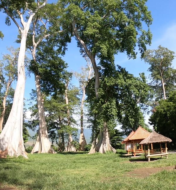 Paket WIsata Big Tree
