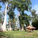 Wisata Big Tree Lombok, Sensasi Serasa di Film Lord of The Rings